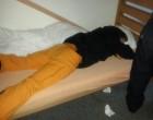 Remy war am Sonntag nach dem Morgenessen schon wieder müde; oder immer noch
